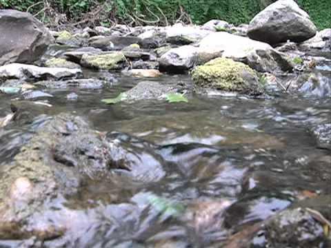 anatomie stream