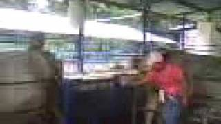 Historia del ganado Raza Carora
