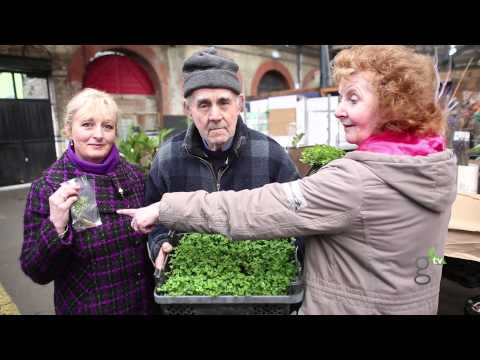 Tale of the Shamrock: Dublin's own Shamrock Experts teach us about our favorite Irish plant on this