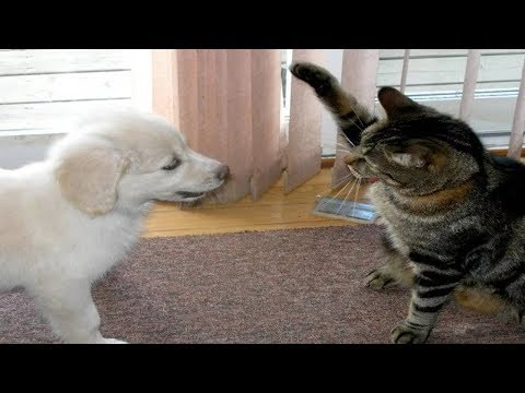 Funny Cats And Dogs - Funny Cats vs Dogs July 2017