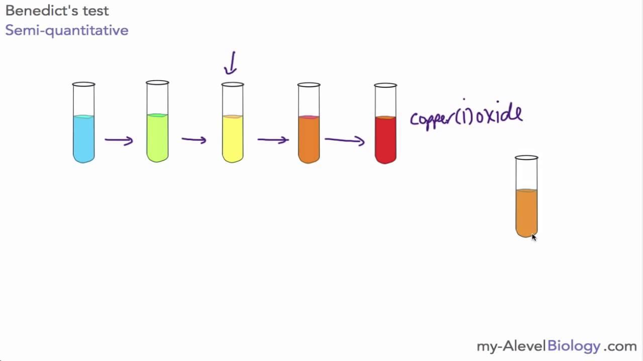 Starch test for biology sba