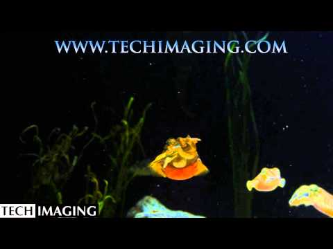 High Speed Video Cameras - Cuttlefish feeding