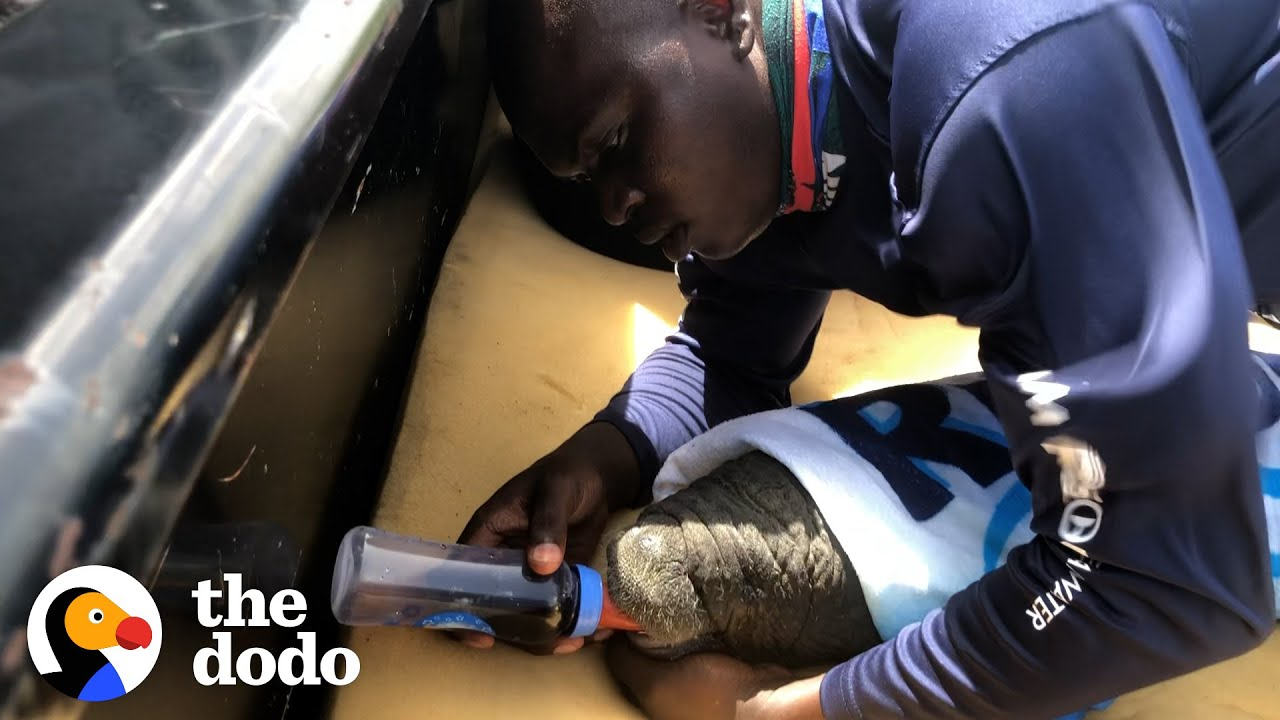 This Guy's Been Rescuing Manatees Since He Was 11 | The Dodo Heroes