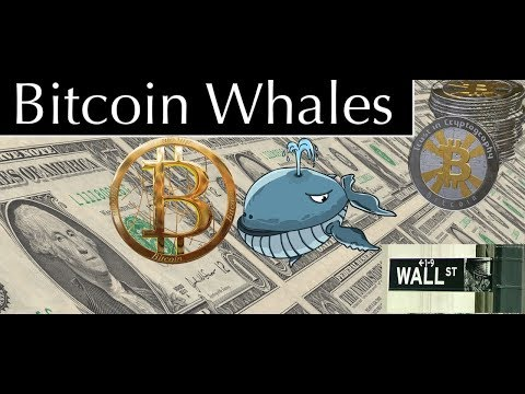 Bitcoin Whales - What You Should Know About Bitcoin Price Surge and Institutional Investors