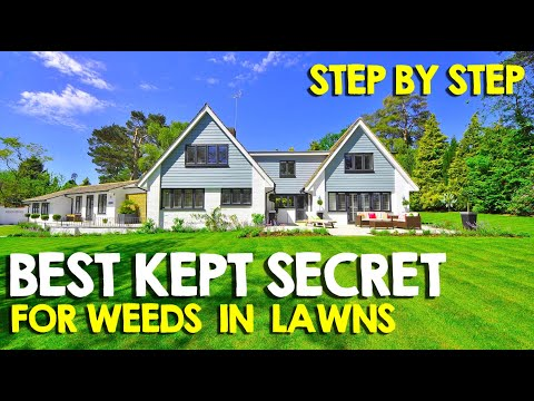 PREVENT Lawn Weeds BEFORE They Grow Using Pre Emergents