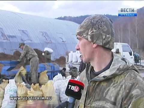 видео: На Дальнем Востоке начался промышленный сбор кедровых орехов