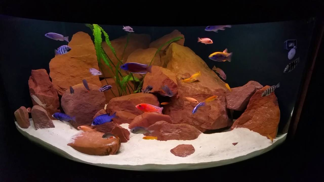 malawi eck aquarium youtube. Black Bedroom Furniture Sets. Home Design Ideas