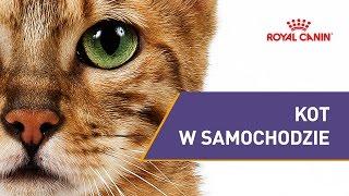 Kot w samochodzie  || #1 Poczekalnia Przyjazna Zwierzętom || ROYAL CANIN