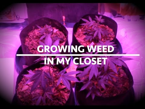 FIRST TIME GROWING WEED IN MY CLOSET!!! How To Grow Weed Indoor CHEAP AF AND EFFECTIVE