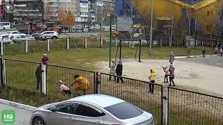 На школьников гимназии №2 напал бультерьер, который гулял без хозяйки