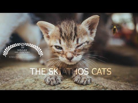 The Skiathos Cats