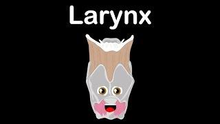 Human Body for Kids/Larynx for Kids/Larynx Facts for Kids