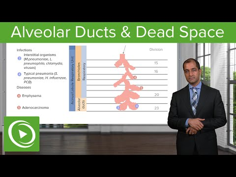 Alveolar Ducts & Dead Space – Pulmonary Pathology | Medical Education Videos