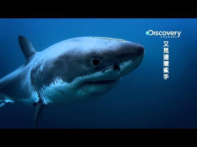 又見連環鯊手 002 加州衝浪海灘有許多目擊大鯊魚攻擊事件令人毛骨悚然 HD MP4檔