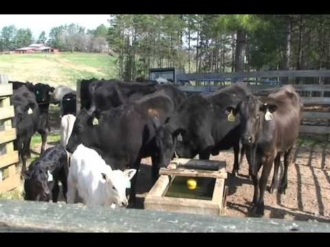 Tanks And Troughs For Livestock Watering Facilities