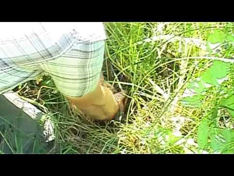 Outdoor-Survival 9: Nahrhafte Pflanzen