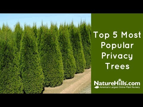 Top 5 Most Popular Privacy Trees YouTube