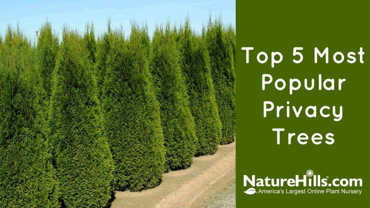 Top 5 Most Popular Privacy Trees | NatureHills.com - YouTube