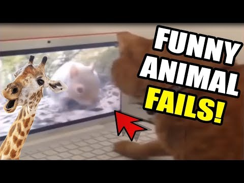 Funny Animal Fails ¦ FUNNY PETS LOL! Compilation ¦