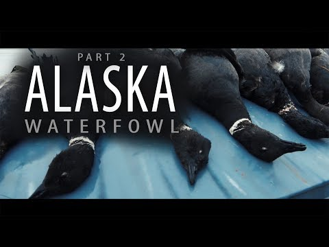 Alaska Adventure: Part 2 | Bear Territory Goose Hunting Over Windsock Decoys