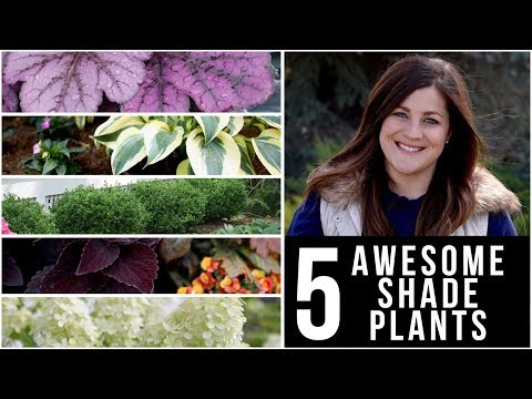 5 Awesome Plants for Shade! 🌿🌥👍  Garden Answer
