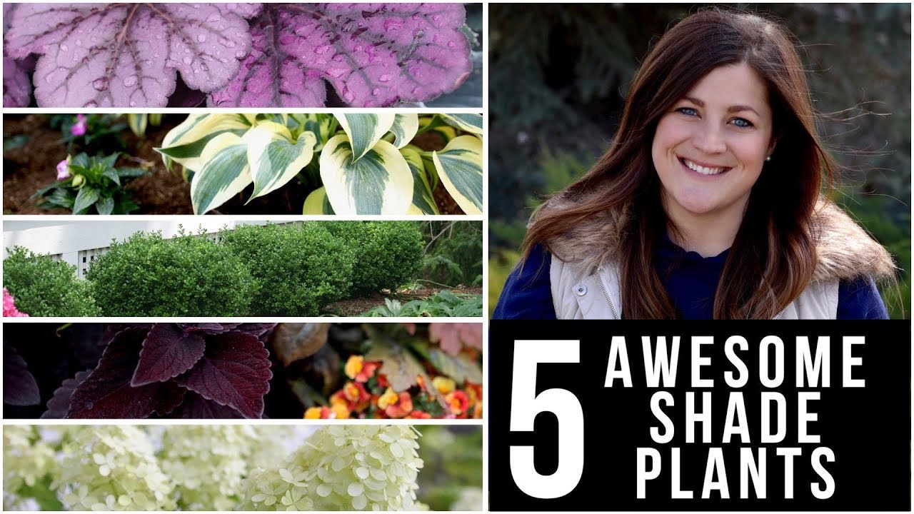 5-awesome-plants-for-shade-garden-answer