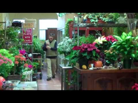 Flo Flowers: The Best Flowers Delivery In New Hyde Park, Long Island, NY