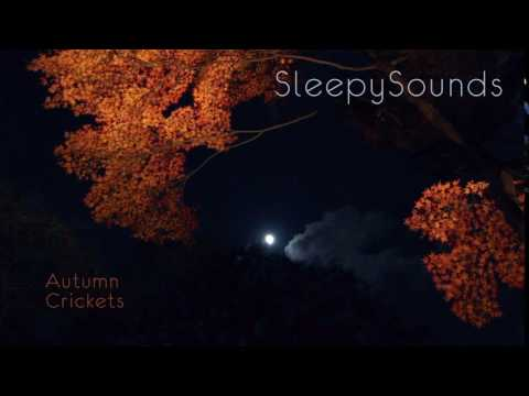 Autumn Crickets - 9-Hour Sleep Sound - Fall Cricket Song