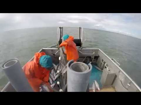 commercial fishing 2016