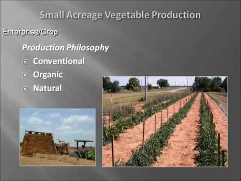 Vegetable Production For Small Acreage