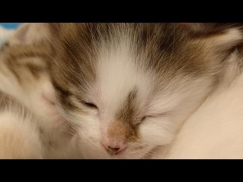 Angels Fish Kittens 2017-03-22