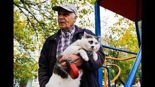 За этого кота Лёву предлагали 450 тысяч, но хозяин наотрез отказался его продавать.