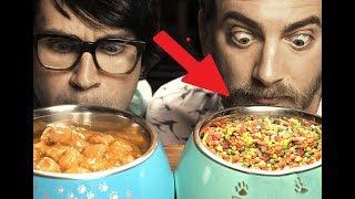 Можно ли питаться кошачьим кормом? Мнение диетологов
