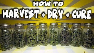 HowTo Harvest, Dry \u0026 Cure Legal Cannabis - Full Process (Wet Trim