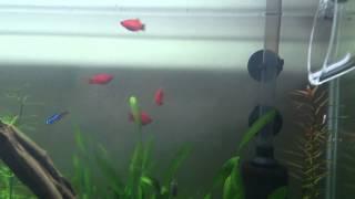 Up Aqua Aquarium Co2 Diffuser - The Effect Of Co2 Diffusibility (low Co2 Used)
