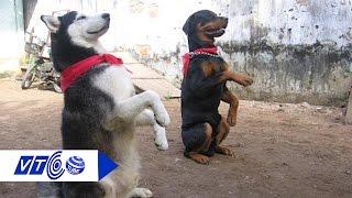 Kinh nghiệm dân gian chọn chó khôn giữ nhà | VTC