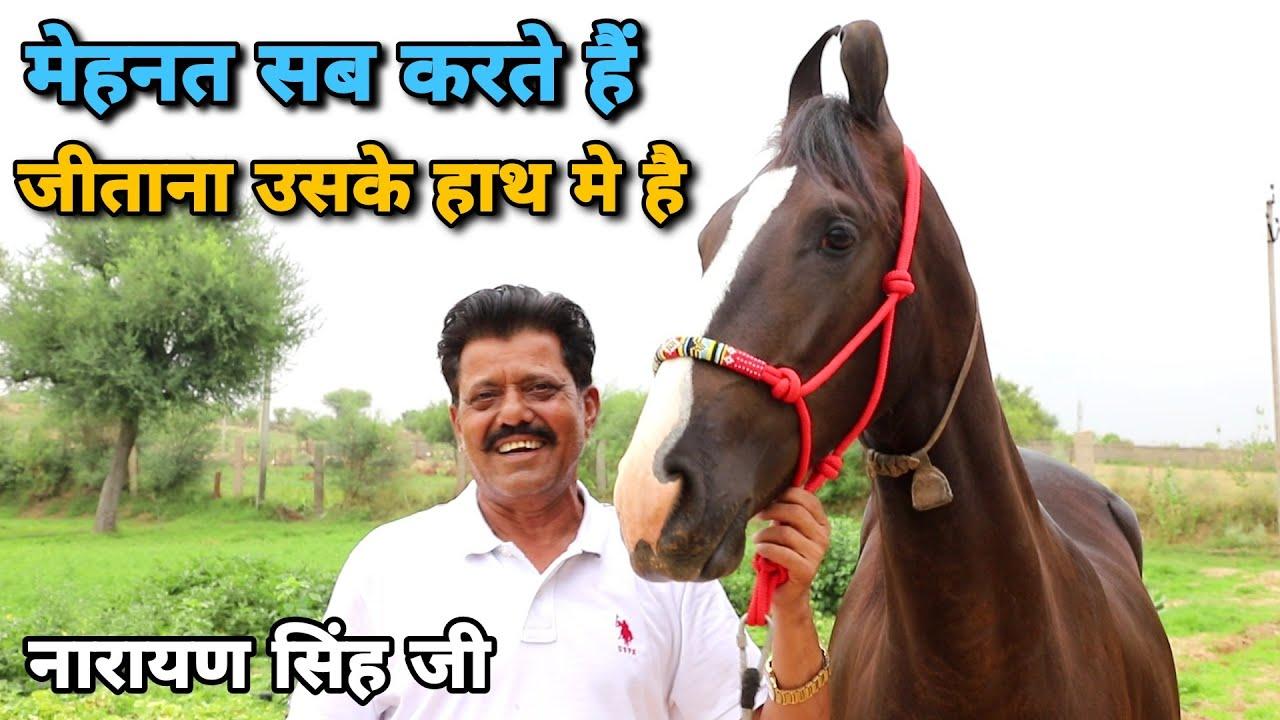 काले काटा की बच्ची पदमा!! Bhomiyasa Stud farm
