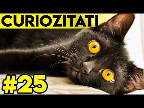 Pisici Negre -
