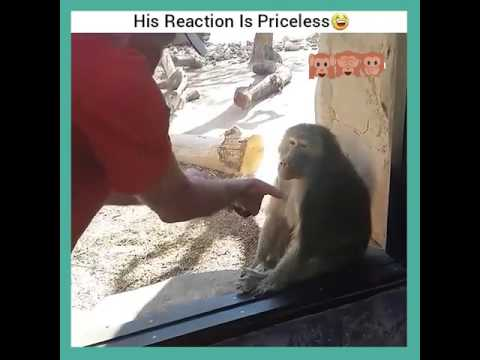 When a monkey sees a magic trick - funny monkey reaction to a magic trick