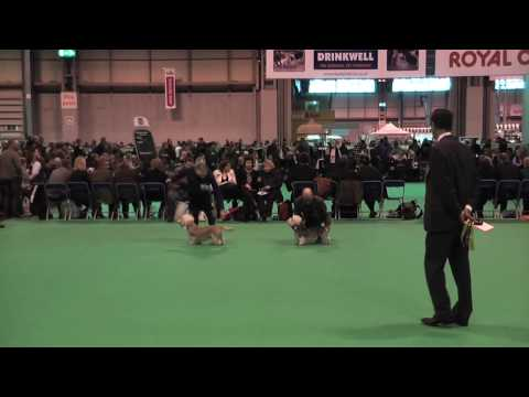 Dandie Dinmont Terriers at Crufts 2010 - Best of Breed