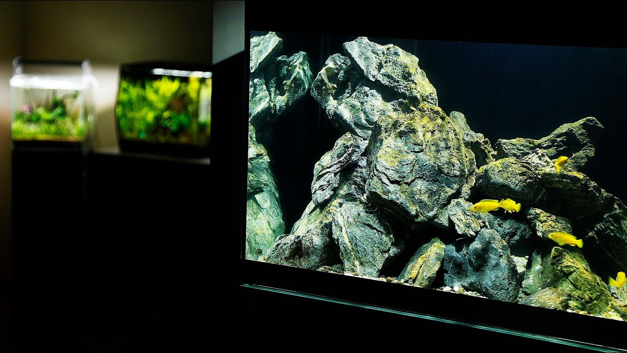 MY AQUASCAPE GALLERY - Planted Aquariums and Malawi ...