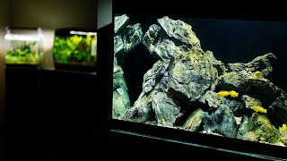 MY AQUASCAPE GALLERY - Planted Aquariums and Malawi Cichlids