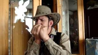 �������� ���� Губная гармошка кантри - SHERNANDOAH ������