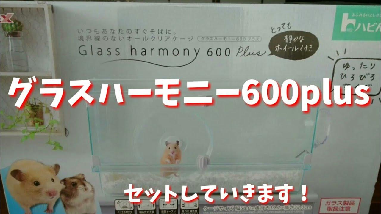 600 グラス ハーモニー