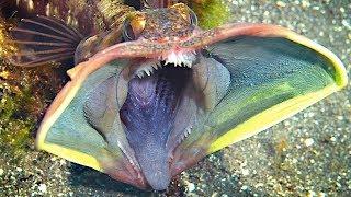 Weirdest Behaviors Of Sea Creatures