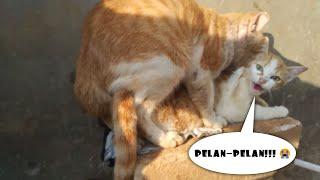 Perawan diperkosa oleh kakek tua sampai berteriak (versi kucing)