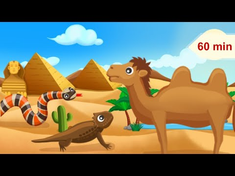 Desert Animals and Relaxing Music for Children | Music for Kids & Babies thumbnail