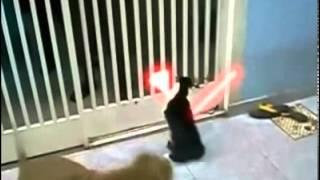 Кот Дарта Вейдера