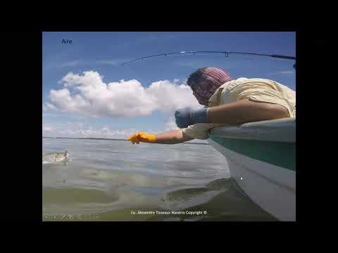 Aspectos biológicos generales del Sábalo Real y recomendaciones para la pesca deportiva.- Expositor Alexander Tisseaux Navarro