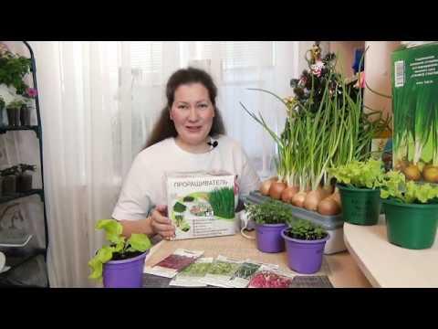 Свежая зелень дома зимой каждый день! Как я выращиваю на подоконнике салат, лук и микрозелень